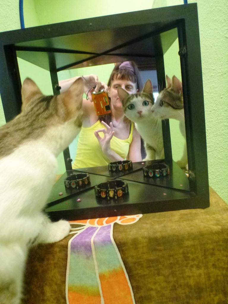 Angelika Linke's cat Josie looking into the True Mirror